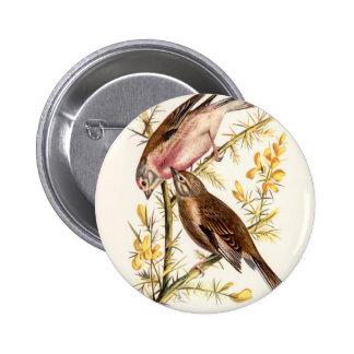 Relative Wild Birds Swaysland Linnets Pinback Button