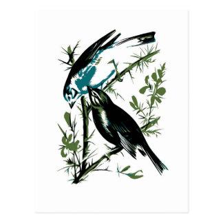 Relative Wild Birds Swaysland Linnets woodcut Inte Postcard