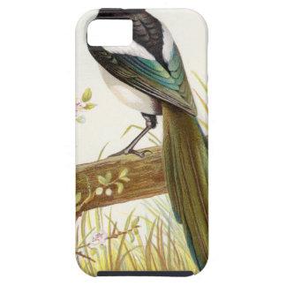 Relative Wild Birds Swaysland Magpie iPhone SE/5/5s Case
