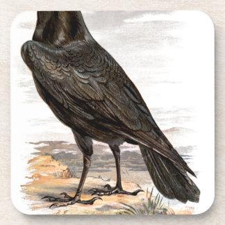Relative Wild Birds Swaysland Raven Beverage Coaster