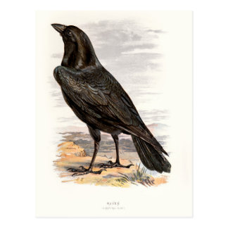 Relative Wild Birds Swaysland Raven Postcard