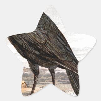 Relative Wild Birds Swaysland Raven Star Sticker