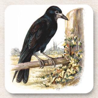 Relative Wild Birds Swaysland Rook Drink Coaster