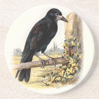 Relative Wild Birds Swaysland Rook Drink Coasters