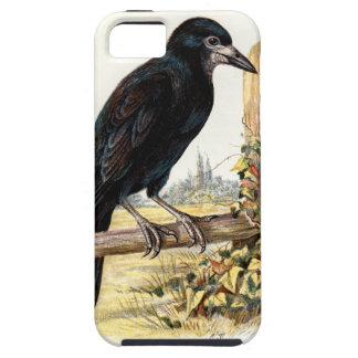 Relative Wild Birds Swaysland Rook iPhone SE/5/5s Case
