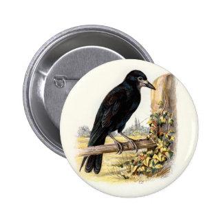 Relative Wild Birds Swaysland Rook Pinback Button