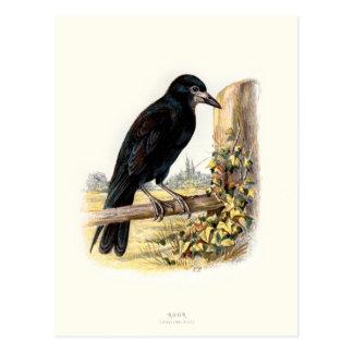 Relative Wild Birds Swaysland Rook Postcard