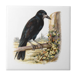 Relative Wild Birds Swaysland Rook Small Square Tile