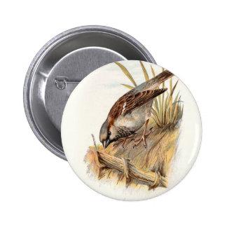 Relative Wild Birds Swaysland Sparrow Button