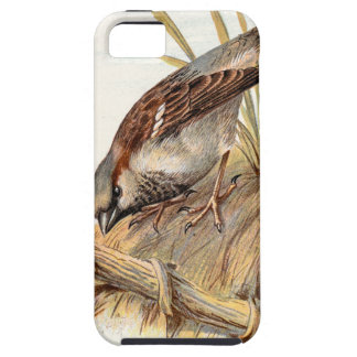 Relative Wild Birds Swaysland Sparrow iPhone SE/5/5s Case