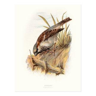 Relative Wild Birds Swaysland Sparrow Postcard
