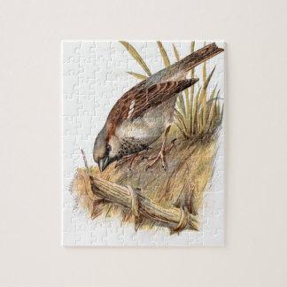 Relative Wild Birds Swaysland Sparrow Puzzles