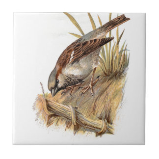 Relative Wild Birds Swaysland Sparrow Small Square Tile