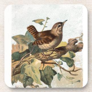 Relative Wild Birds Swaysland Wren Coaster