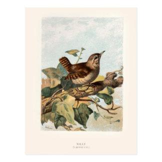 Relative Wild Birds Swaysland Wren Postcard