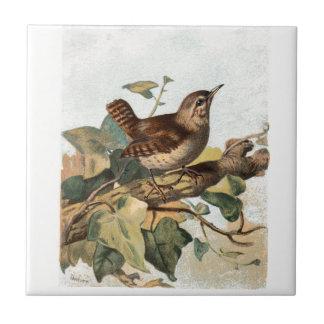 Relative Wild Birds Swaysland Wren Small Square Tile