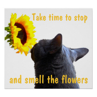 Relax and Smell the Flowers Poster