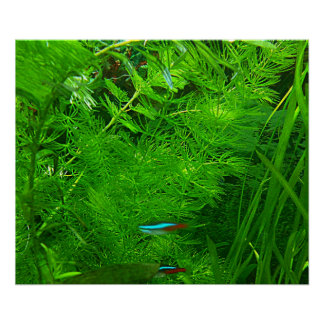 RELAX - AQUARIUM RED BLUE FISH POSTER