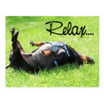 Relax Get Well - Dachshund - Hoover Postcard