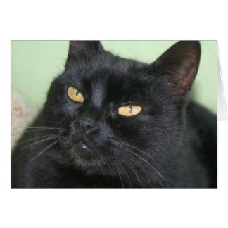 Relaxed Black Cat Portrait Card