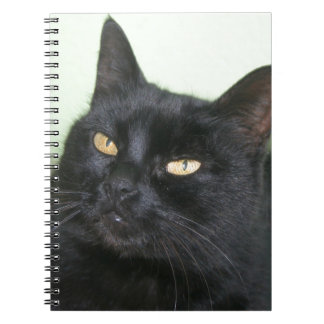 Relaxed Black Cat Portrait Note Book