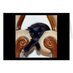 Relaxed Black Cat Sleeping Between Two Chairs Cards
