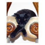 Relaxed Black Cat Sleeping Between Two Chairs Letterhead Template