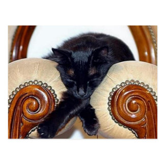 Relaxed Black Cat Sleeping Between Two Chairs Postcard