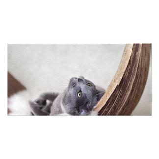 Relaxed Cat Custom Photo Card