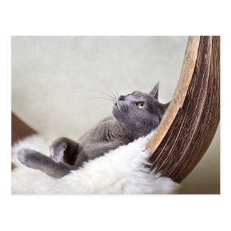 Relaxed Cat Postcard