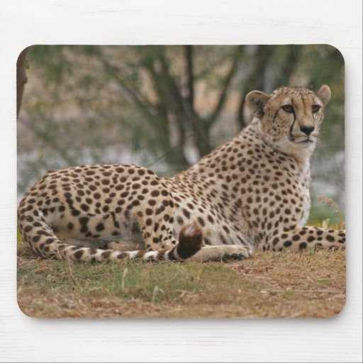 Relaxed Cheetah Mouse Pad
