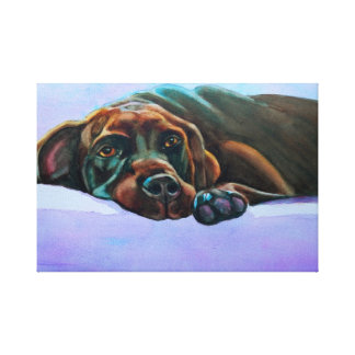 Relaxed Chocolate Lab Stretched Canvas Prints