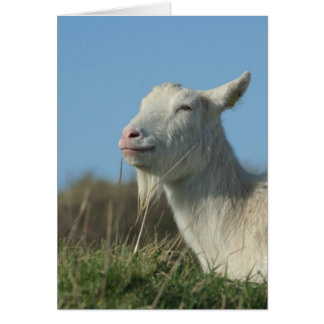 relaxed goat greeting card
