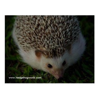 relaxed hedgehog postcard
