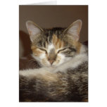 Relaxed Kitty Greeting Cards