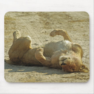 Relaxed Lion Mouse Pad