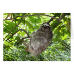 Relaxed Sloth in Nature Greeting Card
