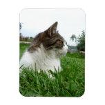 Relaxing Cat in Grass Photograph Rectangular Magnet