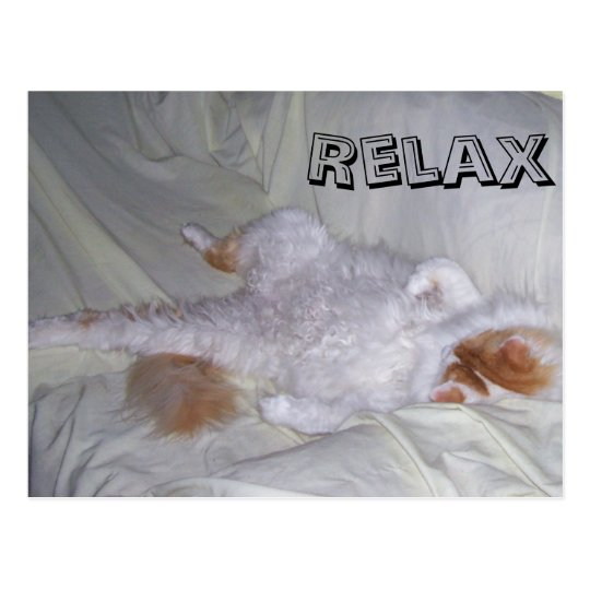 Relaxing Cat Postcard
