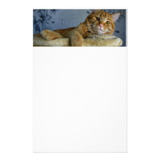 Relaxing Cat Stationery