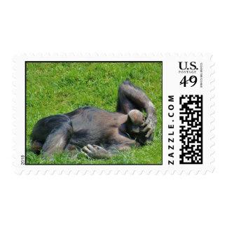 Relaxing Chimpanzee - Stamp