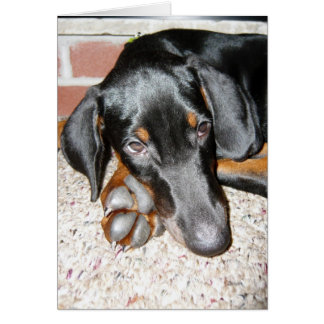Relaxing Doberman Pinscher Puppy - Blank Note Card