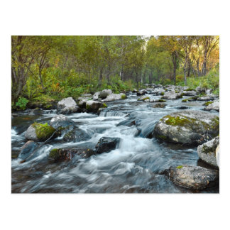 Relaxing Forest River Postcard
