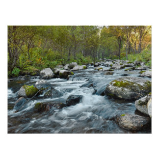 Relaxing Forest River Poster