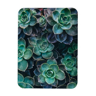Relaxing Green Blue Succulent Cactus Plants Magnet