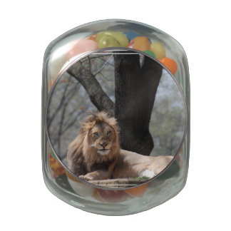 Relaxing Lion Glass Candy Jar