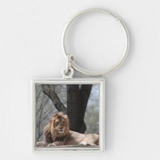 Relaxing Lion Keychains