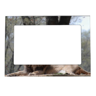 Relaxing Lion Magnetic Picture Frames