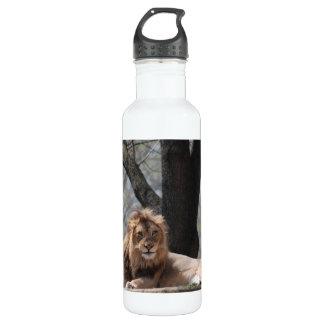 Relaxing Lion 24oz Water Bottle