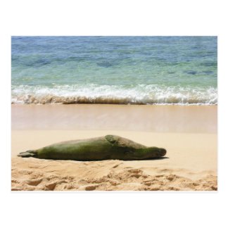 Relaxing Monk Seal Postcard